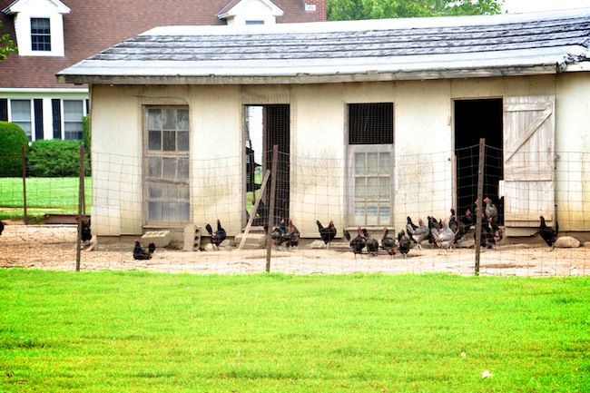 Iacono-Farm-Amagansett-NY-Hamptons-DiCorcia-Interior-Design