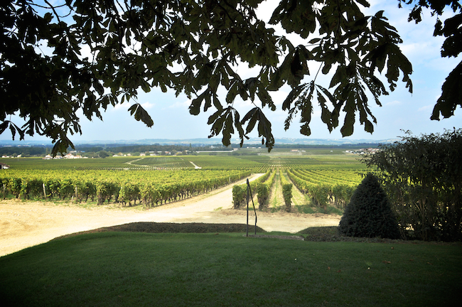 Bordeaux-Harvest-trip-Chateau-d'Yquem-via-DiCorcia-Interior-Design-NY-NJ